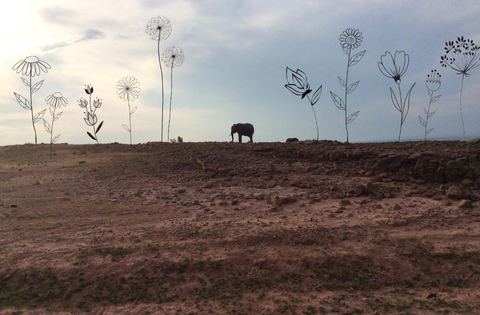#flowerdoodles #elephant #africa #kariba #sand      #FreeToEdit
