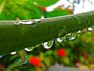 photography rain nature colorful