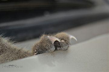 freetoedit paws cat petsandanimals photography