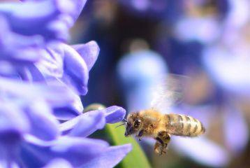 flower spring bee macro detail