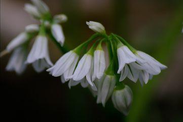 flower flowers up_close close spring