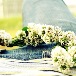 spring nature clover