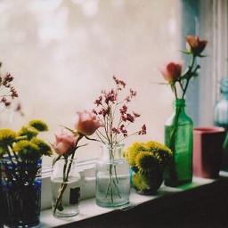 plants flowers window colorful bottles