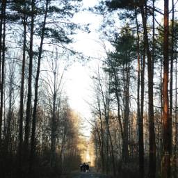 wpptrees trees sunny sun green freetoedit