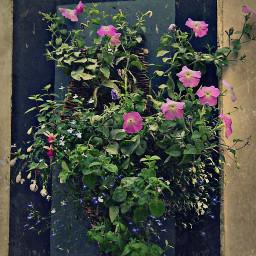 flowers hangingflowers wall naturephotography masktexture