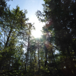 lensflare sunflare dpctrees