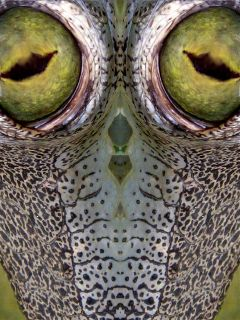 fisheye mirror