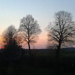 spring trees sun red sky