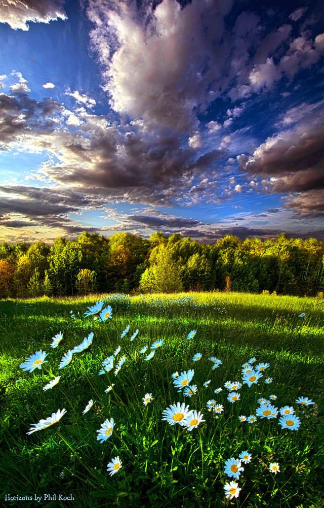Wisconsin Horizons by Phil Koch.  # Daisy #colorful #flower #nature #photography #hdr #flowers #Clouds #Light #goodmorning #hike #green #outdoors #trees #park #sunrise #peace #rural #country #canon #mood #spring