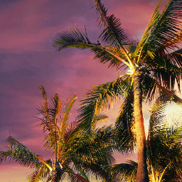 beach colorful colorsplash tropical sunset