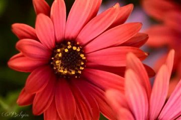 spring flower colors nature flowerlovers